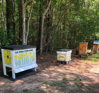 2018 Bee Lady Apiary