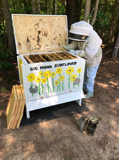 Big Mama Sunflower Beehive Installation