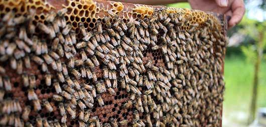 Beehive Beekeeping Mentorship